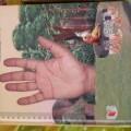 book of astroloji  &  Vastu sastr mantr tantr