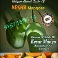 The Famous:  Talala Gir  Kesar Mango has arrived at our Doorstep... #Ahmedabad
