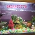 Aquarium decoration items on sell, call/whatsapp 98.24.47.27.76