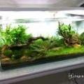 Fish Aquarium Shop in Bharthana Surat